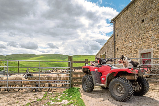 The financial and social impact of rural crime